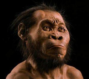 Homo naledi bust